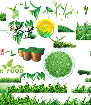 茶叶、茶树透明背景PSD素材